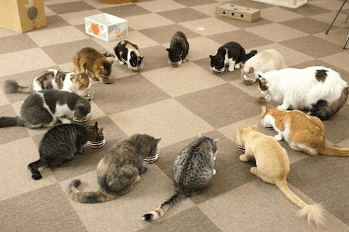 Cats in a circle